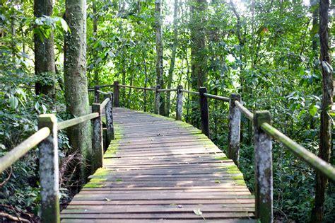 amazon travel travel in the amazon rainforest gondwana ecotours