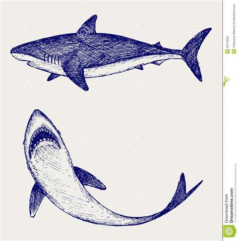 Illustration Reef Shark Royalty Free Stock Photo - Image ...