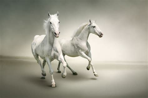 white mustang horse white horse wallpapers pictures images