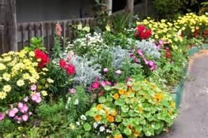 Winter Flower Garden Annual Plants Annual Flowers Annuals Winter Flowers Biennials Perennials