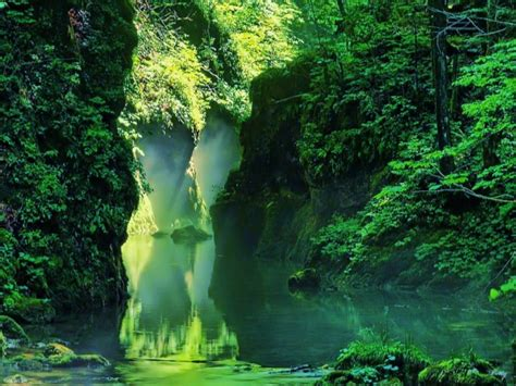 imagenes 3d bosques bonito fondo de bosques fondos de paisajes