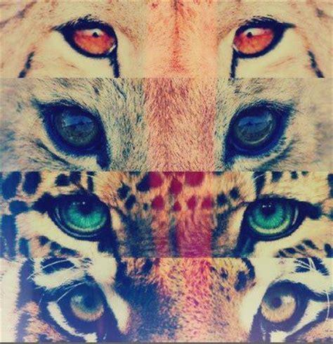 imagenes de leones hipster hipster tumblr and google on pinterest