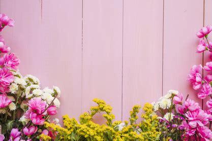 pretty flowers  pink photo