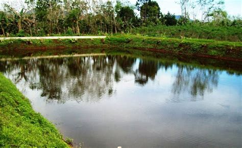 Maskara Ponds 2 In 1 department of agrarian reform basilan province tarbidc