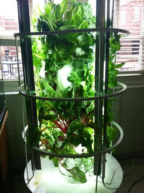 backyard hydroponic garden garden up plant towers make it easy to grown your own