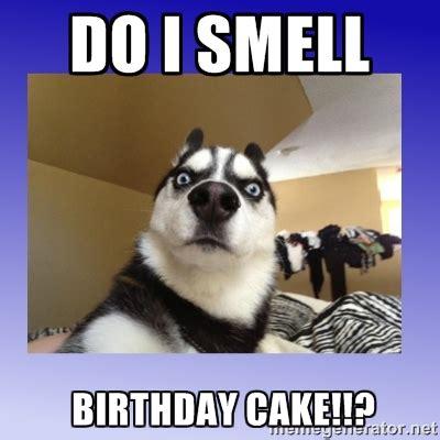 birthday cake meme top happy birthday memes 2happybirthday