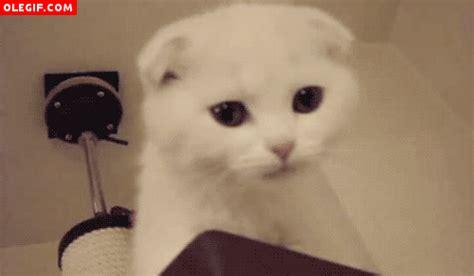 imagenes gif ojos gif mira a este gato c 243 mo cierra los ojos cuando maulla