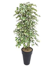 Faux Outdoor Topiary - artificial variegated ficus tree and handbuilt trees from evergreen di