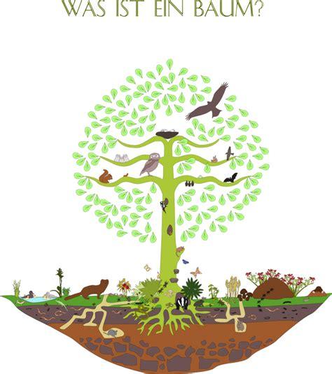 was ist ein baum lebensraum baum themenseite des bund naturschutz
