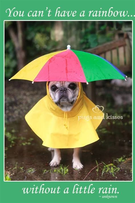 pug raincoat pug coat wierd