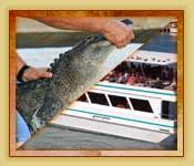 key west boat shuttle from fort lauderdale miami and fort lauderdale everglades tours