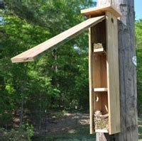 Flying Squirrel House Plans Sialis Picture Of The Week Tuti Nesting In Flying Squirrel Box