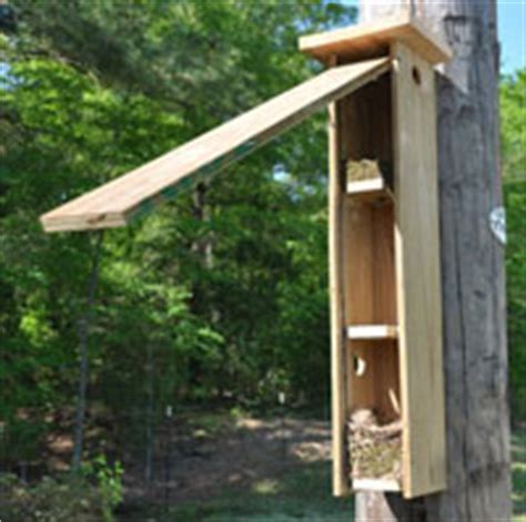 Flying Squirrel House Plans On Two Acres In Town Buster Flying Squirrel House Plans