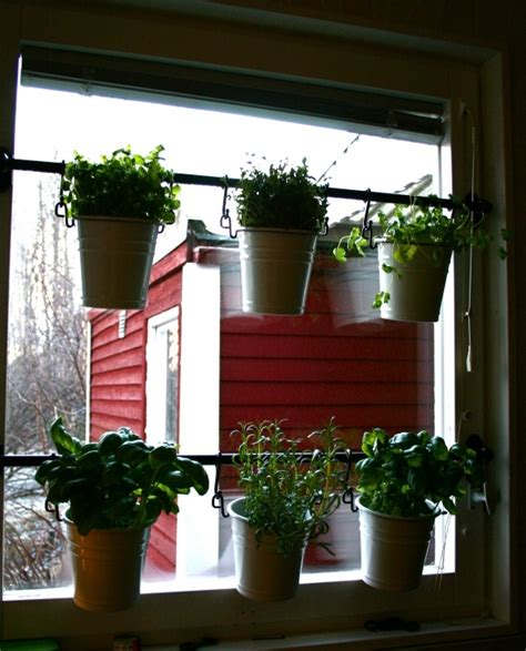 window herb harden window herb garden indoor plants pinterest herbs