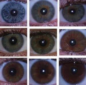 what color is hazel in humans no single gene for eye color researchers prove