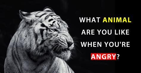 animal     youre angry mydailyquizz