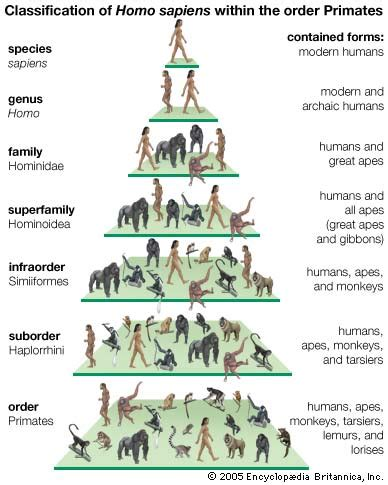 the rise of sapiens the evolution of modern thinking books animal taxonomy animal trees fascinating animals