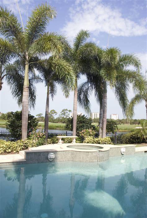 spectacular backyard palm tree ideas home stratosphere