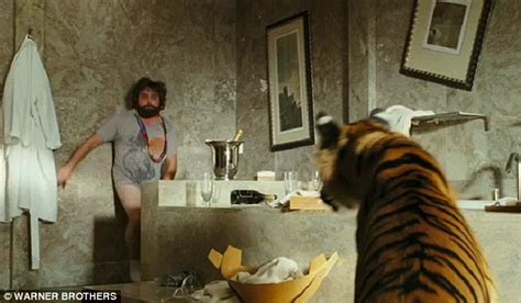 the hangover tiger in the bathroom woman meets circus tiger in bathroom jenna krehbiel comes