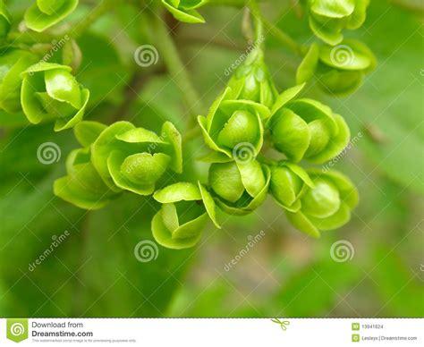 imagenes de flores verdes flores verdes imagenes de archivo imagen 13941624