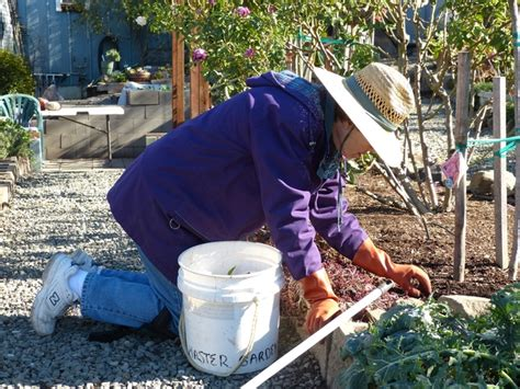 napa master gardener column agriculture and natural resources blogs