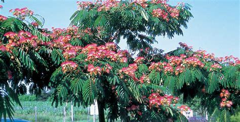 alberi ornamentali per giardino alberi da giardino come metterli a dimora in modo