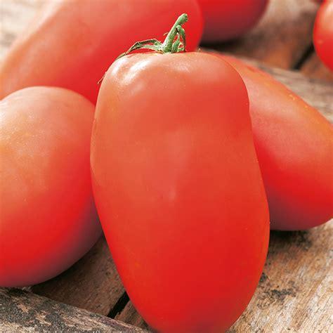 Tomato Roma Vf tomato roma vf seeds d t brown vegetable seeds