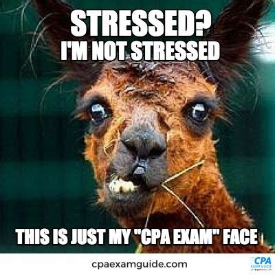 Cpa Exam Meme - cpa exam face is a lot like zoolander s blue steel a bit