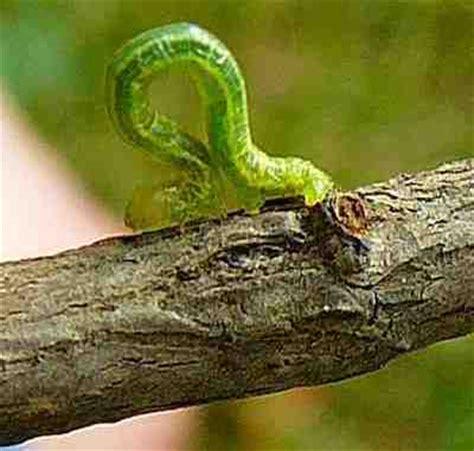 sognare una tigre in casa 84 sognare serpenti interpretazione e numeri libro dei