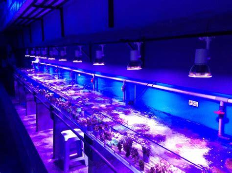 led aquarium lighting planted tank nano nr12 reef 12 leds aquarium lighting l for