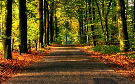 imagenes hd bosques imagenes de bosques imagenes de paisajes naturales hermosos