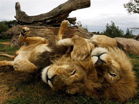 Amazing Animals Beautiful Animals Safaris Safari Amazing Beautiful