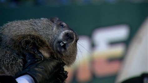 groundhog day how many days did it last groundhog day facts abc news
