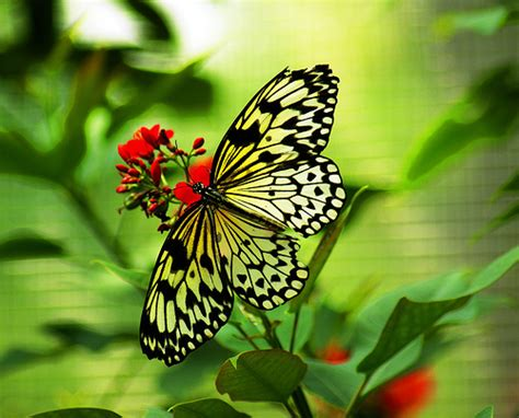 imagenes mariposas naturaleza la belleza de la naturaleza life in the naturale