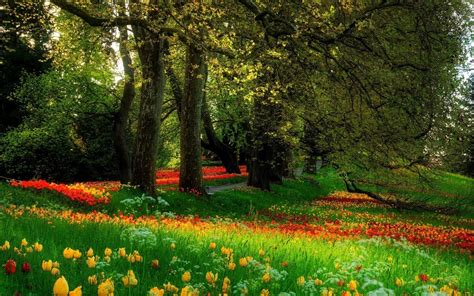 Flower Garden Scenery Lush Greenery Pictures Beautiful Gardens Wonderwordz