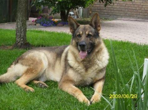 suche neues zuhause für meinen hund hunde tieranzeigen seite 284