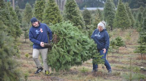 christmas trees bellingham wa whatcom county u cut we cut trees ready the bellingham herald