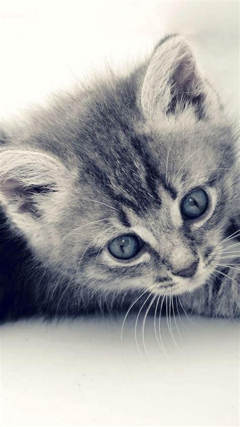 cute cat kitten macro gray background iphone  wallpaper