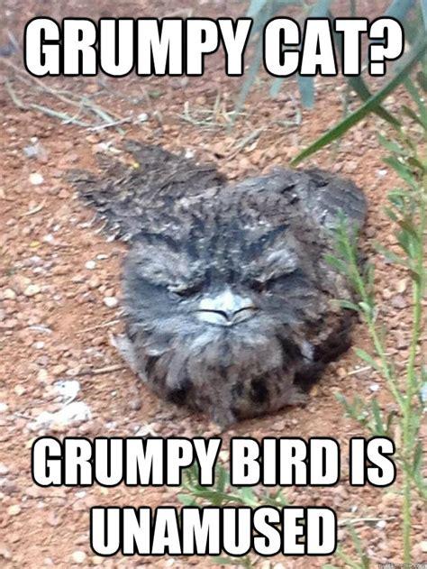 Unamused Cat Meme - grumpy cat grumpy bird is unamused grumpy bird quickmeme