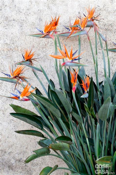 fiori per aiuole pieno sole per l aiuola in pieno sole le tropicali cose di casa