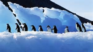 penguin wallpapers hd pictures penguin hd images free