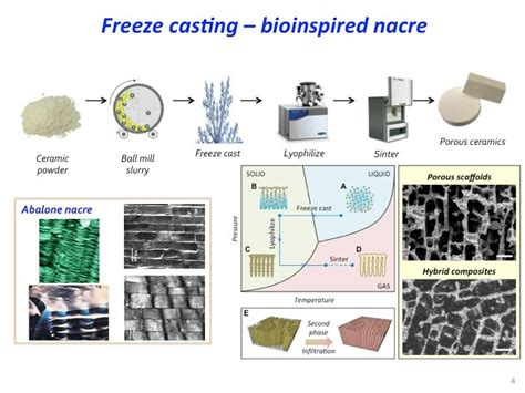 get inspired with biography research part 3 design a bioinspired design cb3m