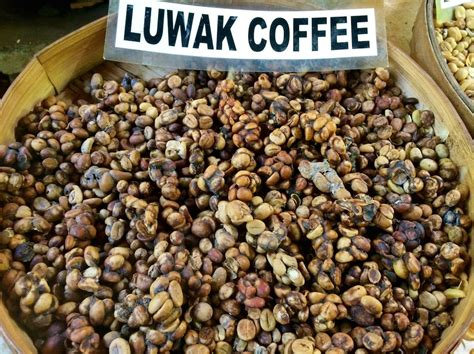 Cafe21 Cafe 21 Kopi 2in1 certifiers shutting out producers using caged civets for kopi luwak daily coffee news by roast