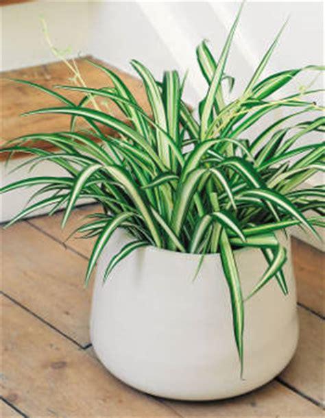 des plantes faciles de culture pour un int 233 rieur sain