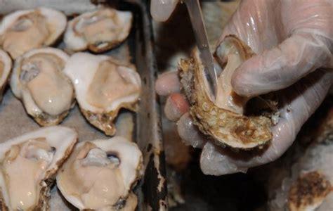 come si cucinano le ostriche come aprire le ostriche facilmente