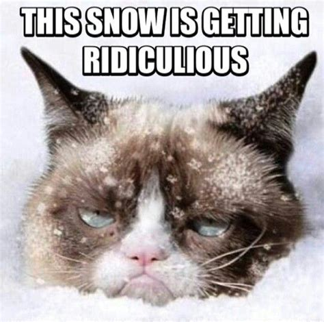 Grumpy Cat Snow Meme - grumpy cat hates snow too just funny pinterest