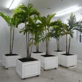pvc planter boxes  wheels  palm trees growing