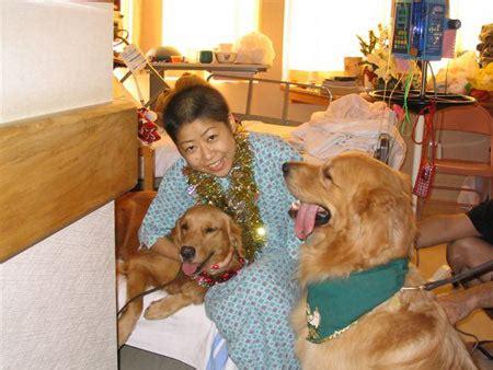 golden retriever rescue hawaii photos 2003