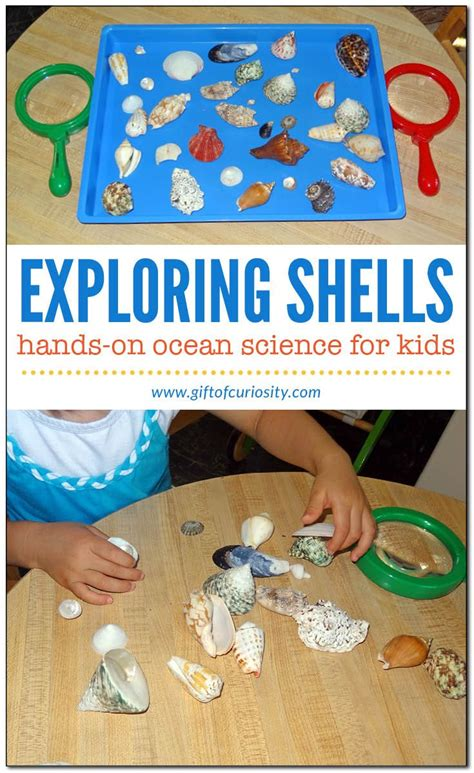 science themes in kindergarten 104 best beach theme activities for preschool and