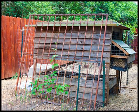 austin backyard chickens urban chicken farming backyard chickens in austin texas